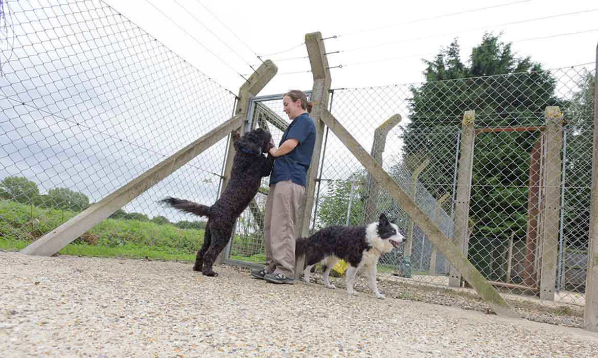 spacious dog kennels in Suffolk