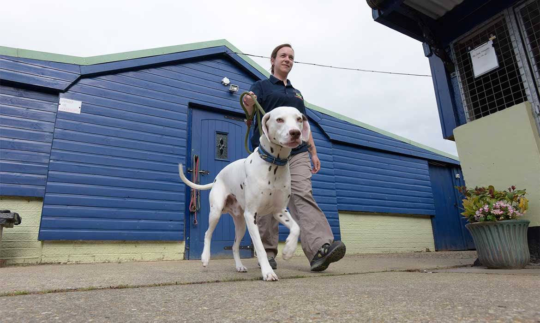 Dog Boarding Kennels Norfolk